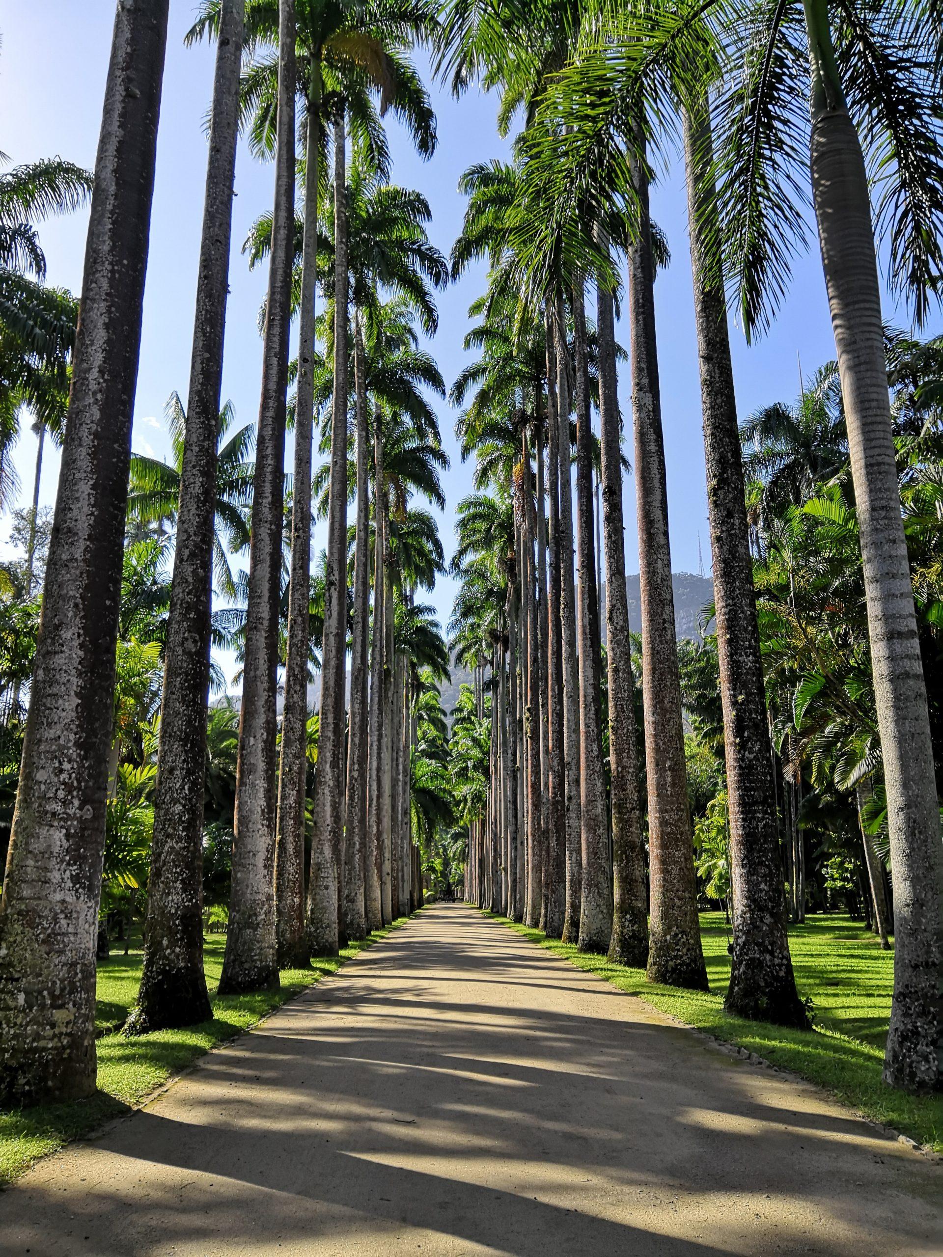 In the Waves of Bossa Sul: The Botanical Garden of RIo de Janeiro
